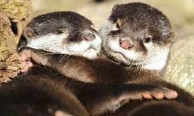 Otterus Interruptus